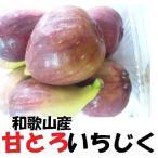 いちじく 和歌山産 2.4kg ジャム作り イチジク いちじく 無花果 完熟 1パック300g前後×8パック 計2.4kg前後 無選別 敬老の日