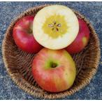 りんご 林檎 希少なリンゴ 福島県産 完全蜜入りサン蜜こうとくりんご 3kg 訳あり 家庭用