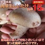 生椎茸 肉厚 きのこマイスターが選ぶ 特選しいたけセット