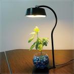 水耕栽培 LEDライト デスクスタンドライト ブラック 黒 デスクランプ 卓上照明器具