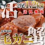 カニ かに 蟹 活 毛ガニ 600g×2尾 1.2kg 北海道産 未冷凍 即納 送料無料 北海道特産 ギフト