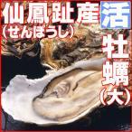 カキ かき 活 牡蠣貝 大 10個 仙鳳趾産 せんぽうし 即納 北海道特産 父の日2017