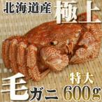 カニ かに 毛ガニ 600g 超特大 極上 毛ガニ 北海道産 活目700g ボイル冷凍 即納 北海道特産