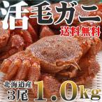 カニ かに 毛ガニ 活 未冷凍 3尾1.0kg 北海道産 送料無料 即納
