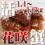 Hanasaki Crab - カニ かに ハナサキ 1.4〜1.6kg  活 花咲ガニオス 未冷凍 北海道特産