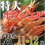 特大ボタンエビ(子持メス・11-12尾)...