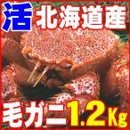 カニ かに 毛ガニ 1.2kg 超特大 極上 活 毛ガニ 稚内産 未冷凍 即納 北海道特産