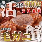 カニ かに 蟹 活 毛ガニ 400g×2尾 800g 北海道産 未冷凍 即納 送料無料 北海道特産 ギフト