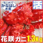 花蟹 - カニ かに ハナサキ 1.3kg 極上 活 花咲ガニオス 未冷凍 北海道特産 お歳暮2017 年末年始配送OK