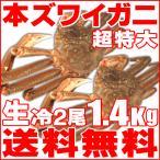 「超特大」生冷本ズワイガニ2尾1.4kg 送料無料!(即納)北海道特産 お歳暮2016 年末年始配送OK!