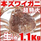 「極上」超特大生冷本ズワイガニ1.1kg(即納)北海道特産 お歳暮2016 年末年始配送OK!