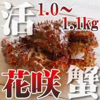 カニ かに 蟹 活 花咲ガニ 1.0-1.1kg 未冷凍 即納 北海道特産 ギフト
