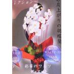 胡蝶蘭 コチョウラン 彩花のワルツ デュエット 生産者直送 ギフト