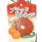 ブラッドオレンジ 8号スリット鉢