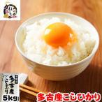米 お米 5kg 千葉県 多古産 こしひかり