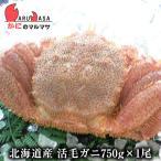 北海道産 特大 活毛ガニ 750g 1尾 極上毛がに お取り寄せ ギフト お土産 通販