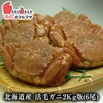 北海道産 活毛がに / 業務用2kg版 6尾セット(かに カニ 蟹)お土産 通販