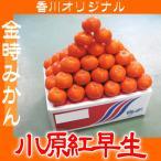 ご予約 香川オリジナル 金時みかん 濃厚で高糖度 小原紅早生 5kg