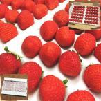 ≪ポイント最大15倍≫業務用 苺 いちご 岐阜県産 すずあかね 300g×2P