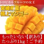 ≪ポイント最大15倍≫訳あり 宮崎県産 完熟アップルマンゴー 宮崎マンゴー 1kg ご予約