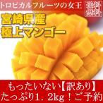 ≪ポイント最大15倍≫送料無料  訳あり 宮崎県産 完熟アップルマンゴー 宮崎マンゴー 1.2kg ご予約