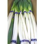 ≪4000円以上送料無料≫柔らかく風味豊 鳥取県産 白ねぎ 1箱3kg
