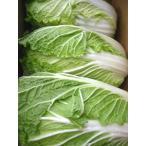 ≪4000円以上送料無料≫国産 はくさい 白菜 1箱12kg