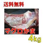 鲔鱼 - 送料無料 大きさ規格外 特大マグロカマ 4kg【まぐろの貴重品】
