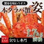 特大本たらば姿蟹 無添加(訳なしホンモノ)オス1.7kg前後・あと僅か 【特大蟹身がスゴい】