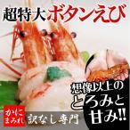 Shrimp - 抜群の鮮度!デカすぎる最高級無添加ボタンエビ(刺身用超特大)【高級寿司店使用】500g