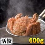 活毛ガニ 600g 大型 北海道産毛蟹 蟹味噌がたっぷりの活け毛がにです。毛ガニの美味しさを味わうなら、未冷凍の活け毛蟹。北海道産グルメ通販