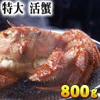 【特大サイズ】北海道産 活毛蟹 800g前後 毛ガニの美味しさを味わうなら、未冷凍の活け活蟹。茹でたて毛がにの醍醐味でもあるカニ味噌。カニ通販
