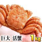 北海道産 活毛蟹 1kg前後 巨大サイズ 毛ガニの美味しさを味わうなら、未冷凍の活け活蟹。茹でたて毛がにの醍醐味でもあるカニ味噌。カニ通販