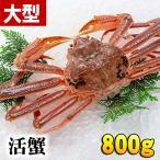 活ズワイガニ 800g(大サイズ) 茹でたてなら到着後、すぐ食べられる未冷凍のズワイ蟹です。活カニ/活け松葉蟹 本ズワイカニ