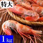 特大子持ち ボタンエビ 2L〜3Lサイズ 1kg(11〜16尾入) 特大サイズのぼたんえび、卵入り。海老味噌も絶品。