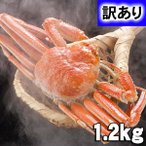 (送料無料)訳あり 活ズワイガニ 2〜3尾入りで合計1.6kg 活ズワイガニわけあり価格。茹でたてなら到着後、すぐ食べられる未冷凍のずわい蟹。松葉蟹 北海道グルメ
