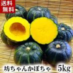 (送料無料)北海道産小玉カボチャ 坊ちゃんかぼちゃ 5kg(8〜10玉入り)粉質でホクホクな南瓜。北海道かぼちゃ野菜グルメお取り寄せ