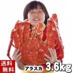 (送料無料) タラバガニ たらばがに 姿 3.6kg 特大 ボイル冷凍(アラスカ・北海道産) たらば蟹贈答用のカニ姿。かに飯や焼きガニも美味しい。(ギフト)