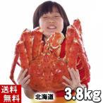 (送料無料) タラバガニ たらばがに 姿 3.8kg 特大 ボイル冷凍(北海道産) たらば蟹贈答用のカニ姿。かに飯や焼きガニも美味しい。(ギフト)