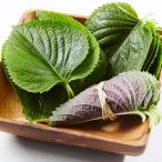 [冷]エゴマの葉(約35-40枚)/韓国野菜/韓国食品/韓国市場