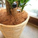 マルチング(鉢土隠し)材ココファイバー(ナチュラル)約100g 観葉植物 花鉢 寄せ植え ハンギング プレゼント ギフト 鉢カゴ 鉢カバー