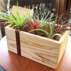 エアープランツおまかせ5種ギフトウッドボックスセット エアプランツ チランジア 観葉植物 ミニ プレゼント 誕生日