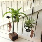 エアープランツおまかせ2種アートシェイプホルダーセット インテリア 北欧 雑貨 風水 エアプランツ チランジア 観葉植物 ミニ プレゼント ギフト 誕生日
