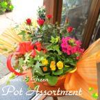 季節のおまかせ寄せ鉢(Mサイズ) 花 フラワー 寄せ植え 寄せ鉢 アソート 花苗 鉢花 ガーデニング ベランダ 玄関 プレゼント ギフト お誕生日 開店祝い 引越し