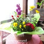 季節のおまかせ寄せ鉢(Sサイズ) 寄せ植え 寄せ鉢 アソート 花苗 鉢花 ハーブ プレゼント ギフト 誕生日 開店祝い 引越し祝い
