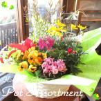 季節のおまかせ寄せ鉢(Lサイズ) 花 フラワー 寄せ植え 寄せ鉢 アソート 花苗 鉢花 ガーデニング ベランダ 玄関 プレゼント ギフト お誕生日 開店祝い 引越し