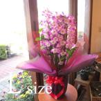 デンドロビューム Lサイズ 花 フラワー 鉢花 鉢植え 花鉢 プレゼント ギフト 贈り物 お誕生日 開店祝い 引越し祝い お歳暮 御歳暮 蘭 洋ラン デンドロビウム