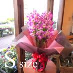 デンドロビューム Sサイズ 花 フラワー 鉢花 鉢植え 花鉢 プレゼント ギフト 贈り物 お誕生日 開店祝い 引越し祝い お歳暮 御歳暮 蘭 洋ラン デンドロビウム