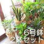 Yahoo!薫る花2鉢セット おためし観葉植物おまかせ6号鉢サイズ 鉢植え ミニ インテリアグリーン プレゼント 誕生日 開店祝い お試し 福袋 幸福の木 パキラ モンステラ