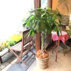 パキラ(ねじり仕立て)8号鉢サイズ 観葉植物 ミニ インテリア プレゼント ギフト 誕生日 結婚記念日 開店祝い 引越し祝い